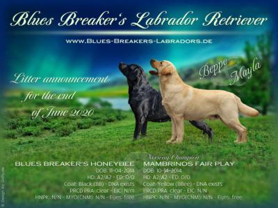 Blues Breaker's V-Wurfplanung